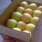 سیب زرد درجه 1