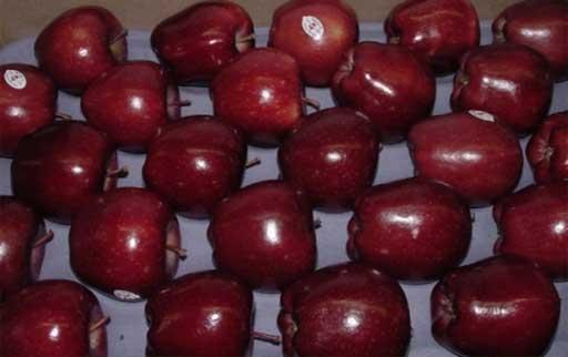 خرید سیب قرمز درجه یک