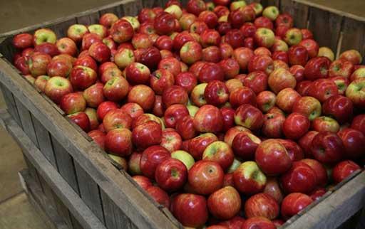 خرید سیب قرمز درجه دو