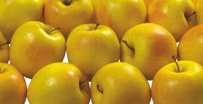 خرید عمده سیب زرد