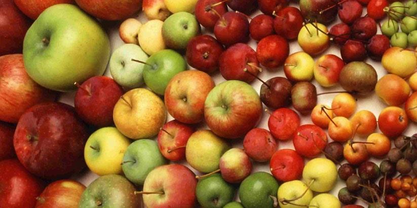 فروش انواع سیب صادراتی