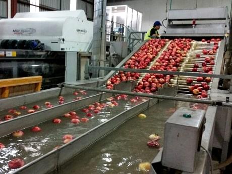 سورت سیب درختی با دستگاه