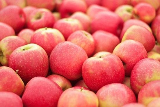 صادرات سیب درختی به روسیه