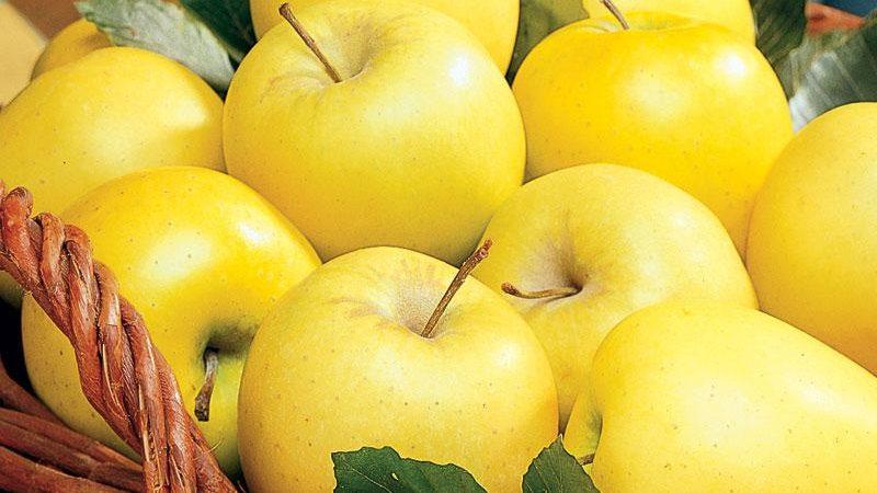 صادرات سیب زرد لبنانی مراغه