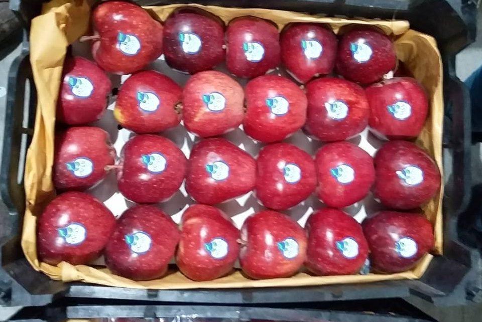 فروش عمده سیب دماوند