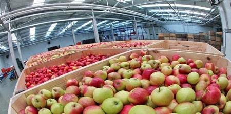 علت نگهداری سیب در سردخانه