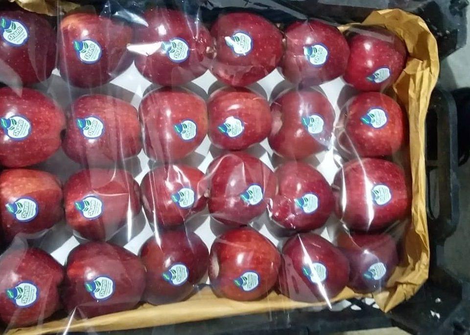 مرکز فروش سیب درختی صادراتی ارزان