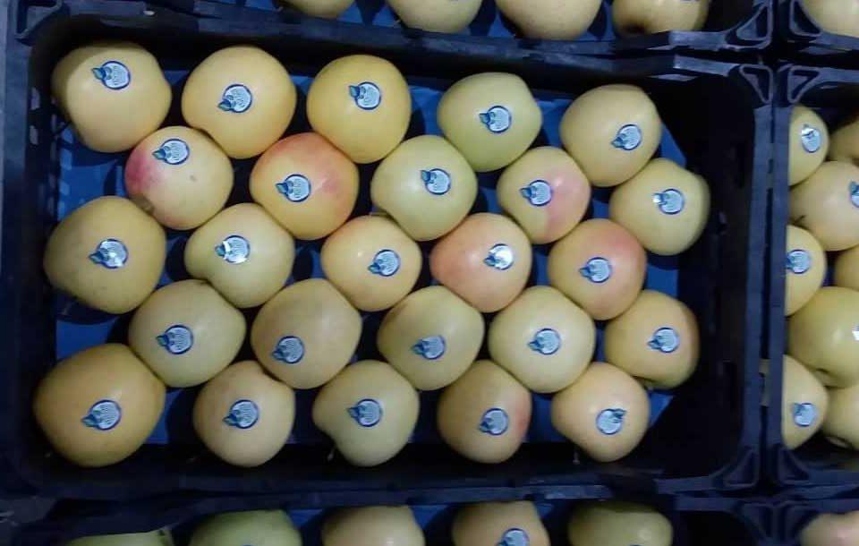 روش بسته بندی سیب صادراتی