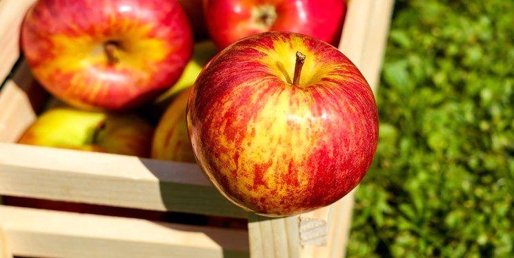 قیمت سیب درختی ارومیه در میدان