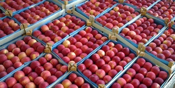 قیمت سیب مراغه برای صادرات به روسیه
