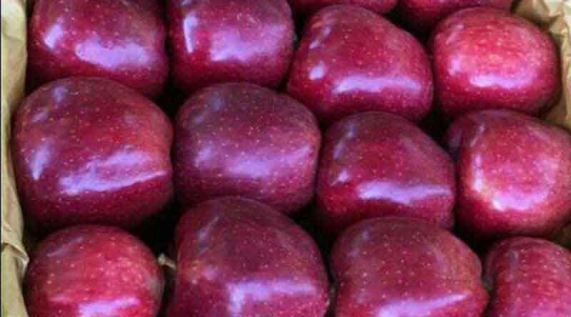 صادرات سیب ارومیه
