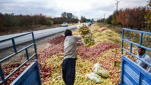 خرید بدون واسطه سیب از باغ