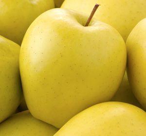 شرکت صادر کننده سیب زرد