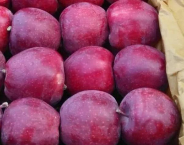 فروش سیب ممتاز ارومیه