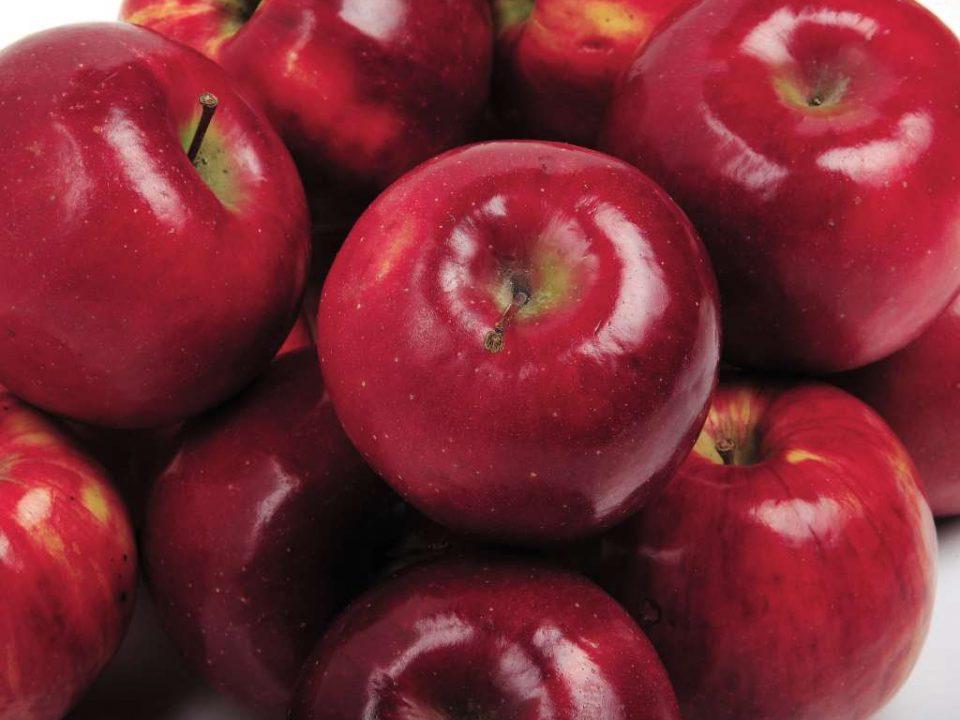 قیمت خرید سیب درختی عمده