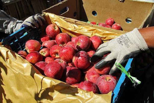 مهم ترین مزایای صادرات سیب به هند